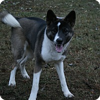 Adopt A Pet :: Blaze - Virginia Beach, VA