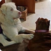 Adopt A Pet :: Elsa - Birmingham, AL