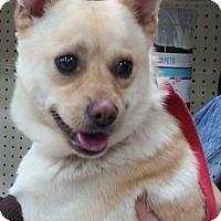 Adopt A Pet :: Sonny - Delaware, OH