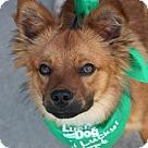 Adopt A Pet :: Paulie
