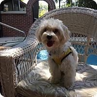 Adopt A Pet :: Otis - Leesburg, FL