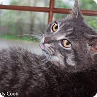 Adopt A Pet :: Kip - Ann Arbor, MI