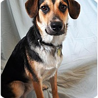 Adopt A Pet :: Jay in CT - East Hartford, CT