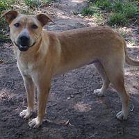Adopt A Pet :: Sooner - Shawnee, OK