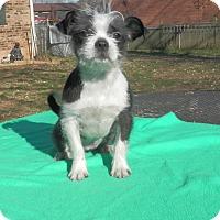 Adopt A Pet :: Gracie-Marie - Clarksville, TN