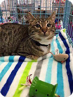 Cat Rescue Mansfield
