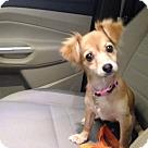 Adopt A Pet :: Daisy Mae~adopted!