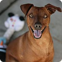 Adopt A Pet :: Tiny - Canoga Park, CA