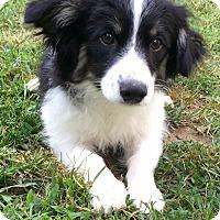 Adopt A Pet :: Sam - Newtown, CT