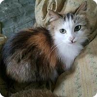 Adopt A Pet :: Cameo - Ortonville, MI