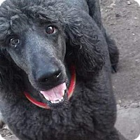 Adopt A Pet :: Marley - White Settlement, TX