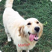 Adopt A Pet :: Marion - BIRMINGHAM, AL