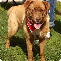 Adopt A Pet :: Marigold - River Rouge, MI