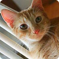 Adopt A Pet :: Mohawk - Arlington, VA