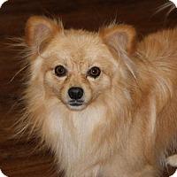 Adopt A Pet :: Guido - Prosser, WA
