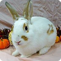 Adopt A Pet :: Roger - Alexandria, VA