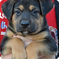 Adopt A Pet :: Doby - Simi Valley, CA