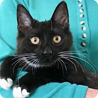 Adopt A Pet :: Ace VALENTINE'S SPECIAL! 50% O - Republic, WA