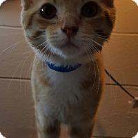 Adopt A Pet :: Hollifield - Henderson, KY