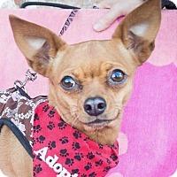 Adopt A Pet :: Matilda - San Marcos, CA