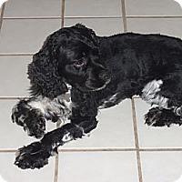 Adopt A Pet :: Brody - Sugarland, TX