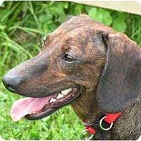 Adopt A Pet :: Mona - Rigaud, QC