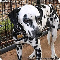Adopt A Pet :: Pongo - Newcastle, OK