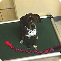 Adopt A Pet :: Ty - Nashville, TN