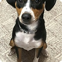 Adopt A Pet :: Joe - North Olmsted, OH