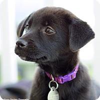 Adopt A Pet :: McKinlay - Homewood, AL