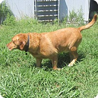 Adopt A Pet :: Buster - Copperas Cove, TX