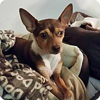 Adopt A Pet :: Sadie - San Diego, CA