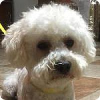 Adopt A Pet :: Ozzie - La Costa, CA