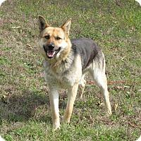 Adopt A Pet :: Sabrina - Oakland, AR