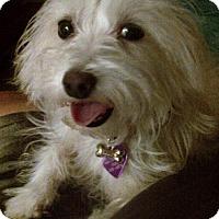 Adopt A Pet :: Bentley - San Dimas, CA