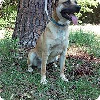 Adopt A Pet :: Boris - Lebanon, ME