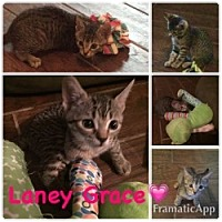 Adopt A Pet :: Laney Grace - Centerville, GA