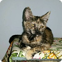 Adopt A Pet :: SQUEAKS - Ridgewood, NY