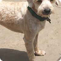 Adopt A Pet :: Dougie - Norwalk, CT