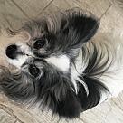 Adopt A Pet :: Wyzer  (in FL) 14 yrs
