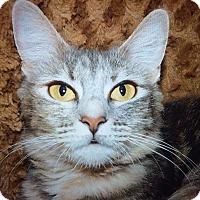 Adopt A Pet :: Jewls - Chula Vista, CA