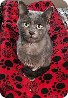 Domestic Shorthair Cat for adoption in Princeton, Minnesota - Mabel