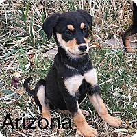 Adopt A Pet :: Arizona - Albuquerque, NM