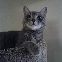 Adopt A Pet :: URGENT Artie (courtesy listing) - West Palm Beach, FL