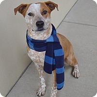 Adopt A Pet :: Furlie - McKinney, TX