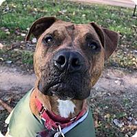 Adopt A Pet :: Tigger - Austin, TX