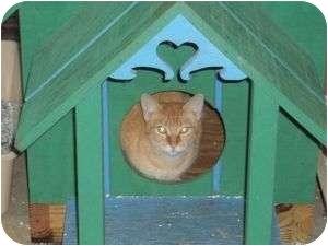 Domestic Shorthair Cat for adoption in McDonough, Georgia - Thomas