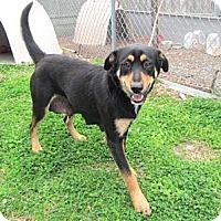 Adopt A Pet :: Tara - Richmond, VA