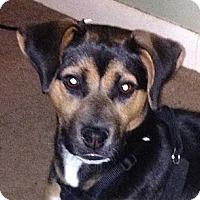 Adopt A Pet :: Juno - Garwood, NJ