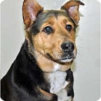 Adopt A Pet :: Sarge - Port Washington, NY